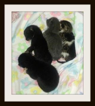 kittens.5days