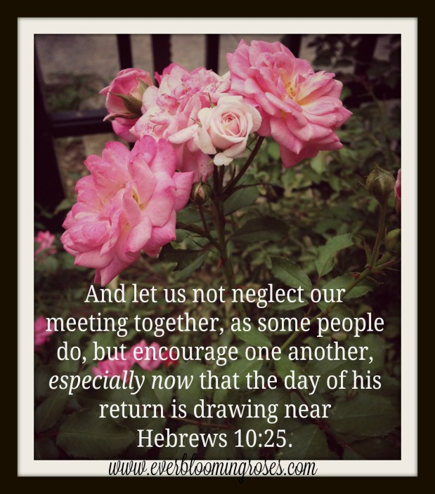 rose-assembly-withscripture.jpg