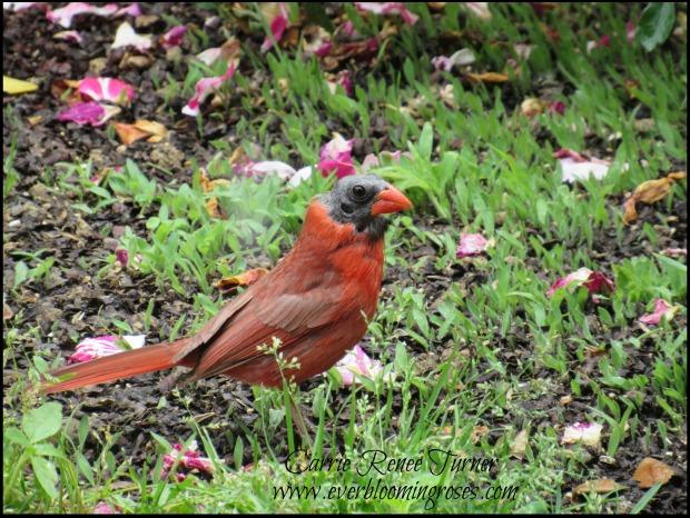 Cardinal.seelings.6.7.16.web.sig