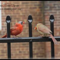 Mr.andMrs.Cardinal.6.7.16.web.sig