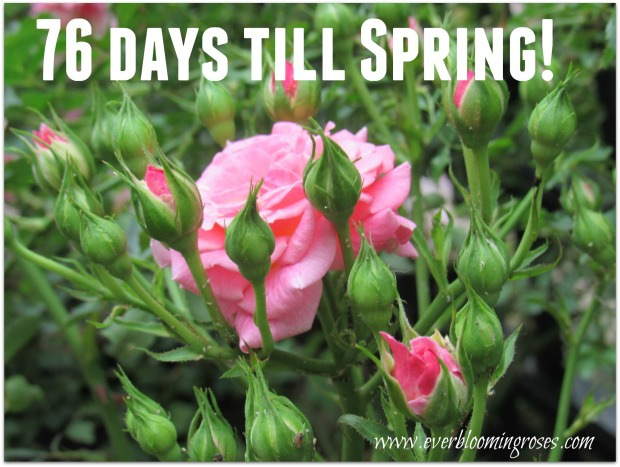 jan2nd-76daystillspring