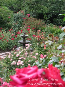 Portland's International Test Rose Garden