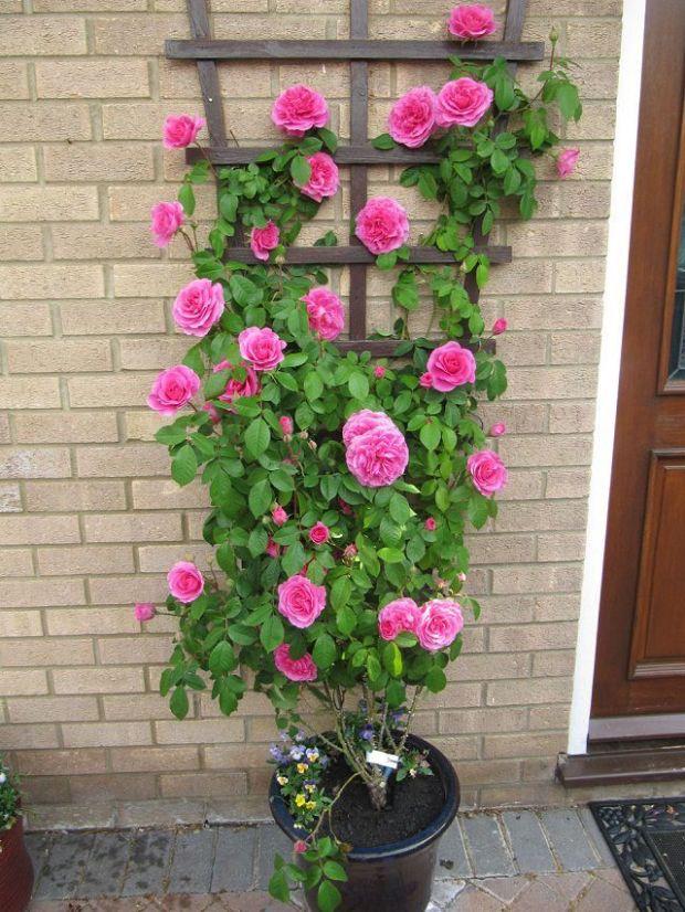 9b0fa7e0326e24dddb5e4e875b64bd46--garden-privacy-balcony-garden