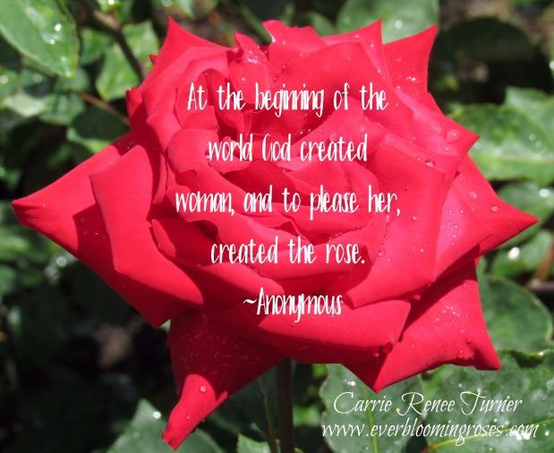 rosecreatedforwomanquoteChristianDiorHGwebsig