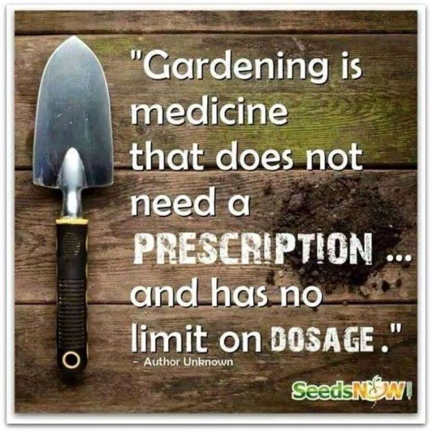 97eb22a1b51e5a91cc7c8c5be05a6923--gardening-quotes-gardening-tips