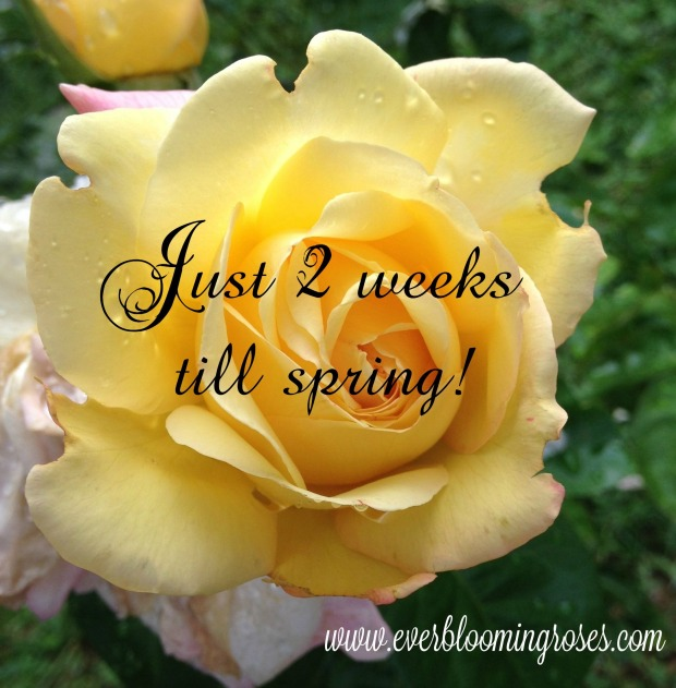 Mar6th2weekstillspring