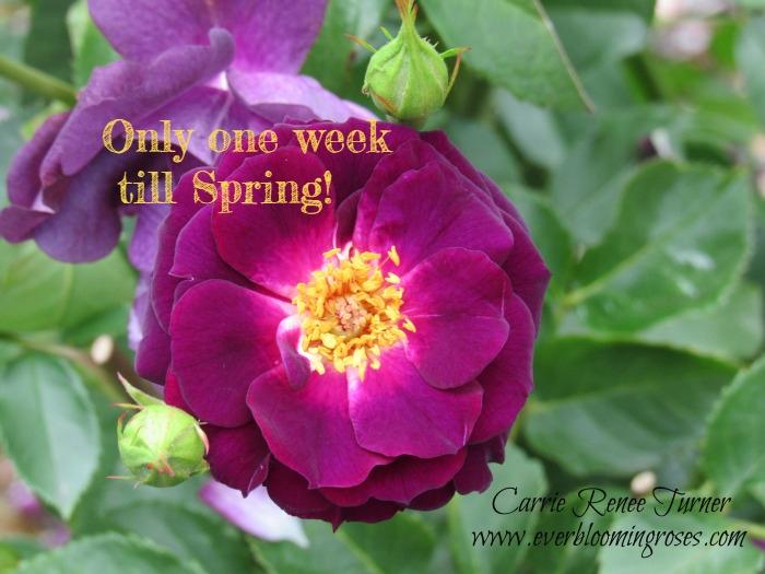 oneweektillSpring