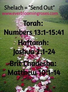 TorahPortion.Shelach.EBR